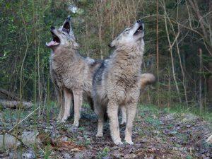 Prepareerweekend wolf