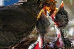bird-3350138_1920