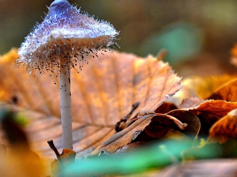mushroom-602870_1920-1