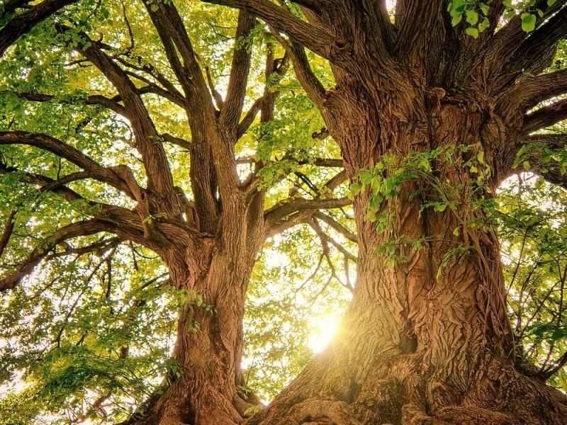 tree-3822149_1920-1