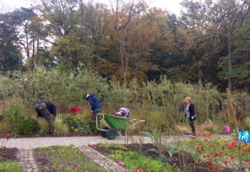 Meedoen in de tuin van het Duurzaamheidscentrum Assen